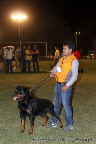 ex-141,rottweiler,sw-122,, UNIK FLASH ROUSE, Rottweiler, DogSpot.in