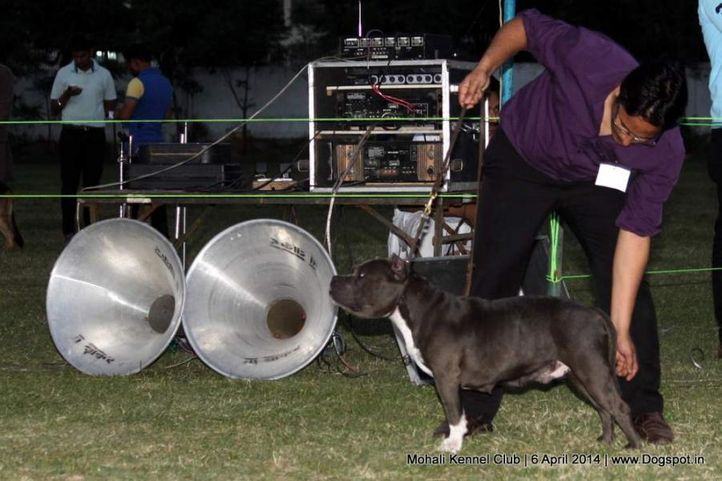 ex-190,sw-122,, Mohali Kennel Club, DogSpot.in