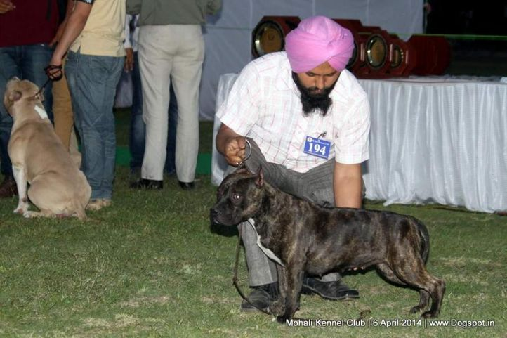ex-194,sw-122,, Mohali Kennel Club, DogSpot.in