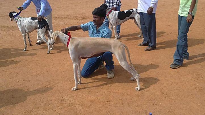 bangalore dog show photos, Mudhol winner, DogSpot.in