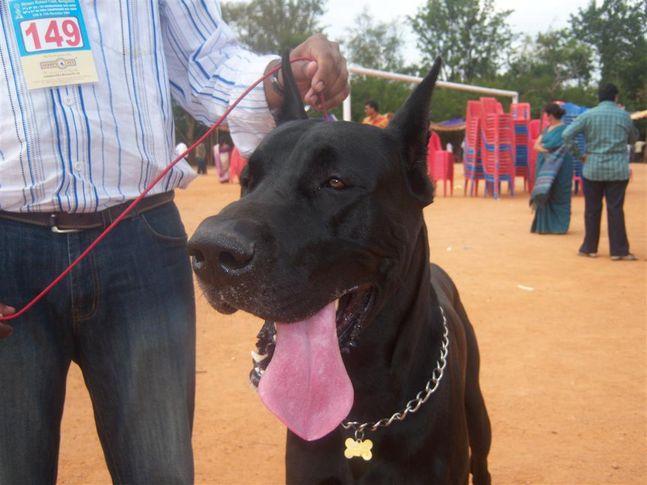 , Mysore Kennel Club, DogSpot.in
