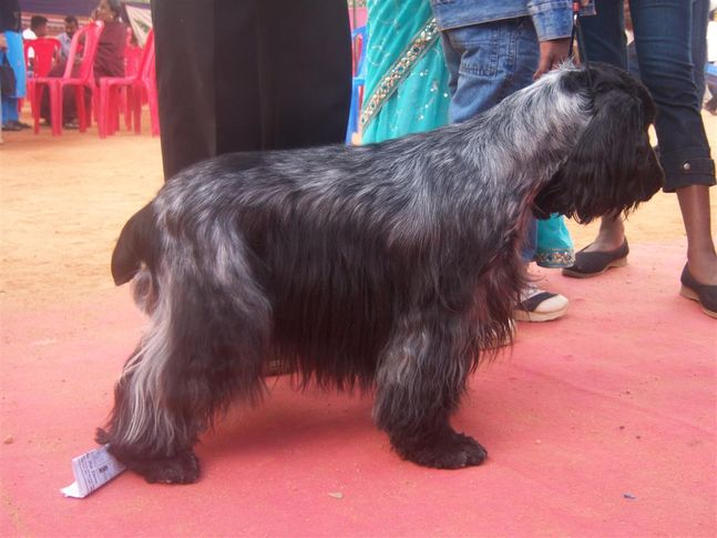 , Mysore Kennel Club, DogSpot.in