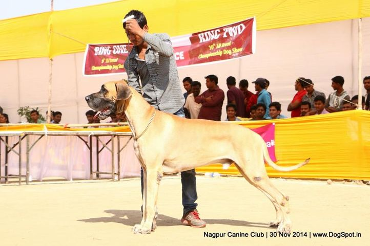 ex-132,great dane,sw-137,, THE STYLE, Great Dane, DogSpot.in