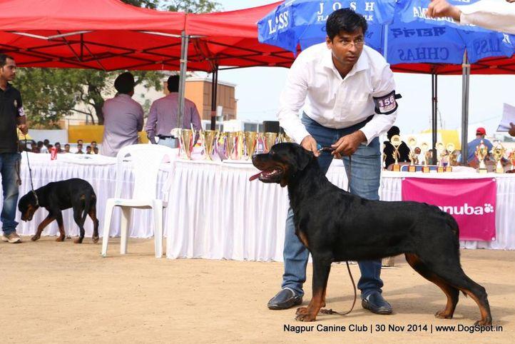 ex-156,rottweiler,sw-137,, AHILL'S ASHA, Rottweiler, DogSpot.in