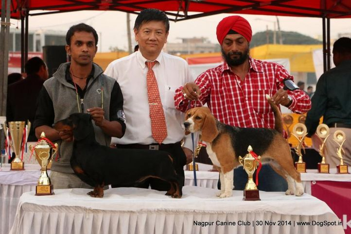hound group winner,sw-137,, Nagpur Canine Club, DogSpot.in