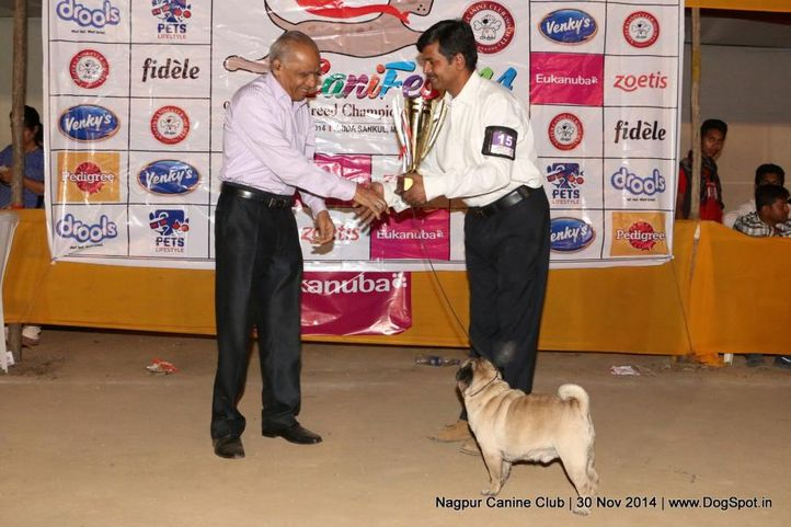 other awards,sw-137,, Nagpur Canine Club, DogSpot.in