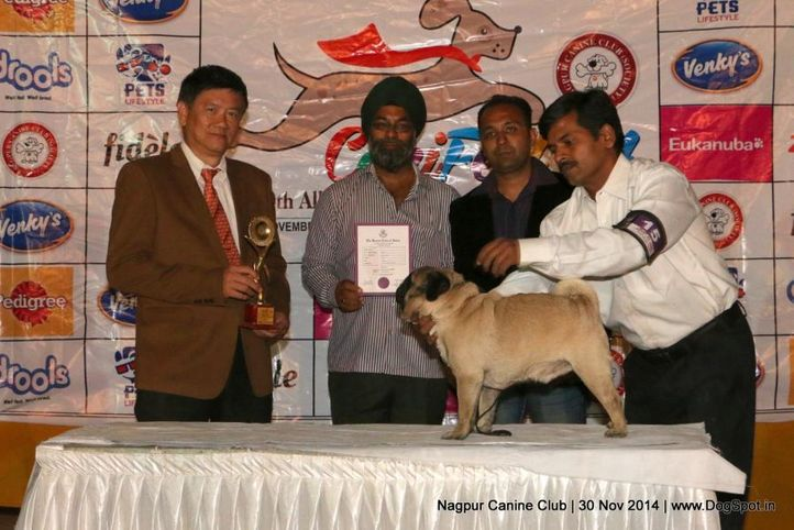line up,sw-137,, Nagpur Canine Club, DogSpot.in