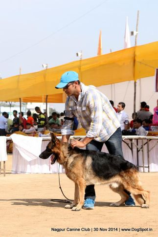 ex-189,german shepherd dog,gsd,sw-137,, KINGWAYS ISAAK, German Shepherd Dog, DogSpot.in