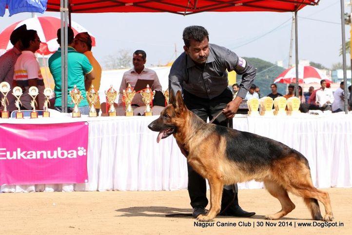 ex-192,german shepherd dog,gsd,sw-137,, APPLE'S ZAMP, German Shepherd Dog, DogSpot.in