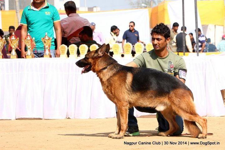 ex-233,german shepherd dog,gsd,sw-137,, FANTO OF PALEOLAND, German Shepherd Dog, DogSpot.in