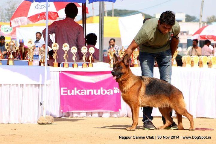 ex-209,german shepherd dog,gsd,sw-137,, EDDY OF WARIKON, German Shepherd Dog, DogSpot.in