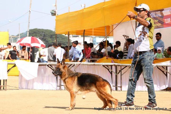 ex-216,german shepherd dog,gsd,sw-137,, WILDSTROBE'S WILME, German Shepherd Dog, DogSpot.in