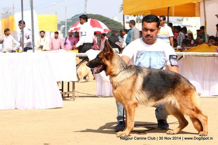 ex-191,german shepherd dog,gsd,sw-137,, SUNEHABEE'S MARIYA, German Shepherd Dog, DogSpot.in