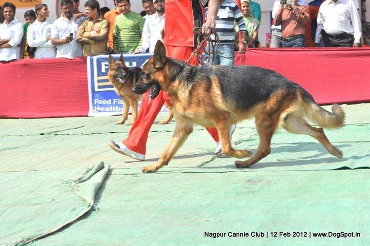 gsd,, Nagpur Dog Show, DogSpot.in