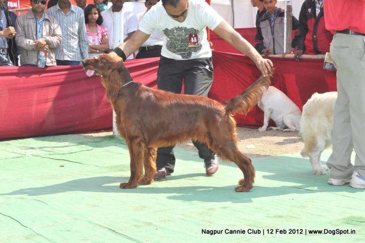 irish,, Nagpur Dog Show, DogSpot.in