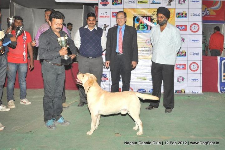 lineup,, Nagpur Dog Show, DogSpot.in
