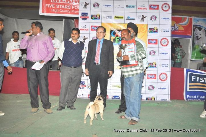 pug,, Nagpur Dog Show, DogSpot.in