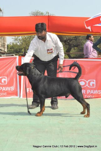 rottweiler,, Nagpur Dog Show, DogSpot.in