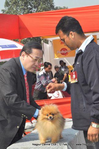 pomeranian,, Nagpur Dog Show, DogSpot.in