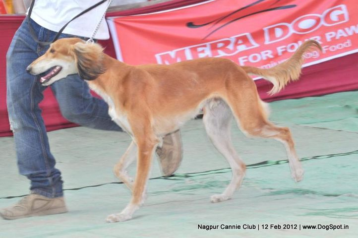 carvan hound,, Nagpur Dog Show, DogSpot.in