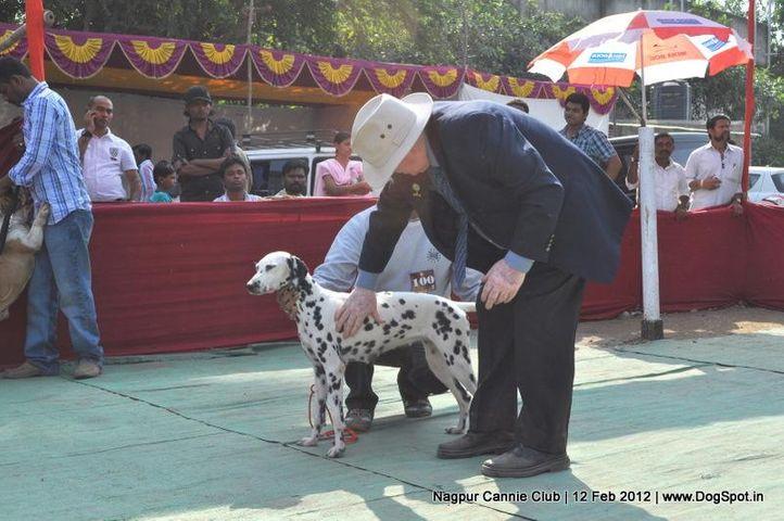dalmation,, Nagpur Dog Show, DogSpot.in