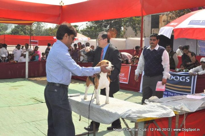 beagle,, Nagpur Dog Show, DogSpot.in