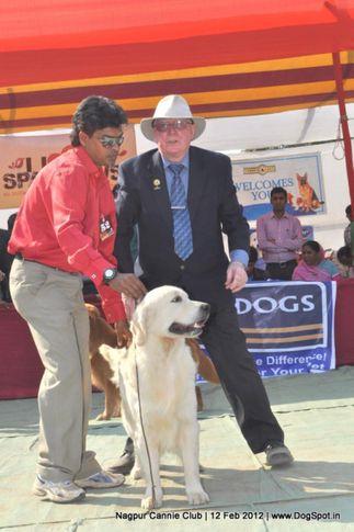 golden retriever,, Nagpur Dog Show, DogSpot.in