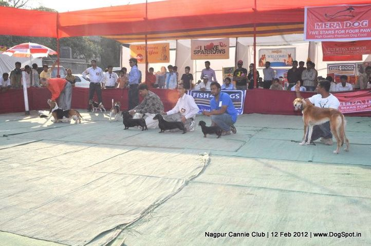 groups,, Nagpur Dog Show, DogSpot.in