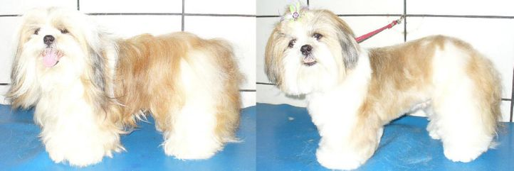 , Babi before and after, DogSpot.in