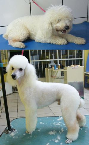 , Átila before and after, DogSpot.in