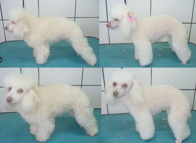 , Nina before and after, DogSpot.in