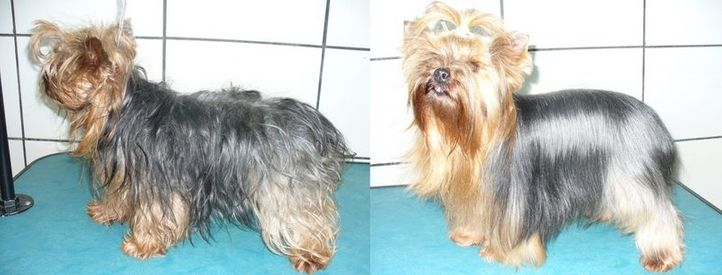 , Pepê before and after, DogSpot.in