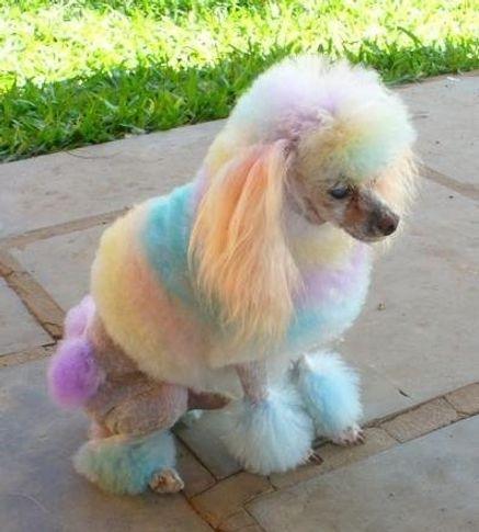 , Popó Rainbow, DogSpot.in
