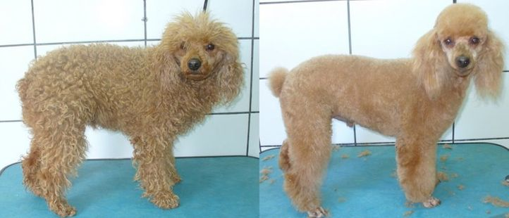 , Puff before and after, DogSpot.in