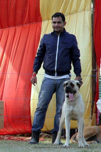 bullmastiff,sw-99,, Noida Dog Show 2013, DogSpot.in