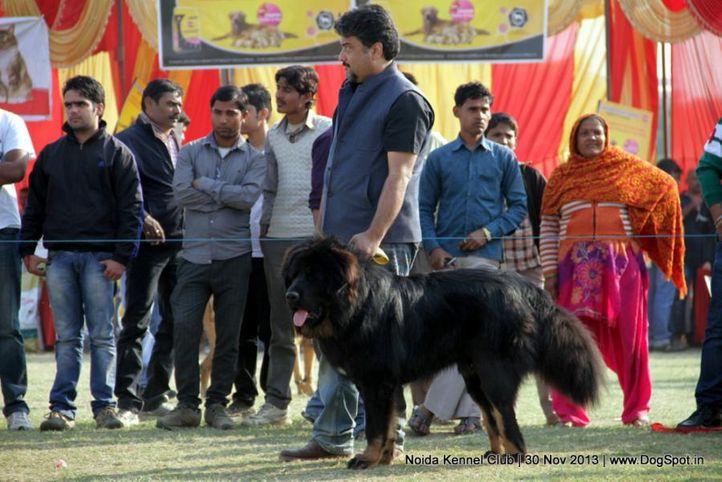 sw-99,tibetan mastiff,, Noida Dog Show 2013, DogSpot.in