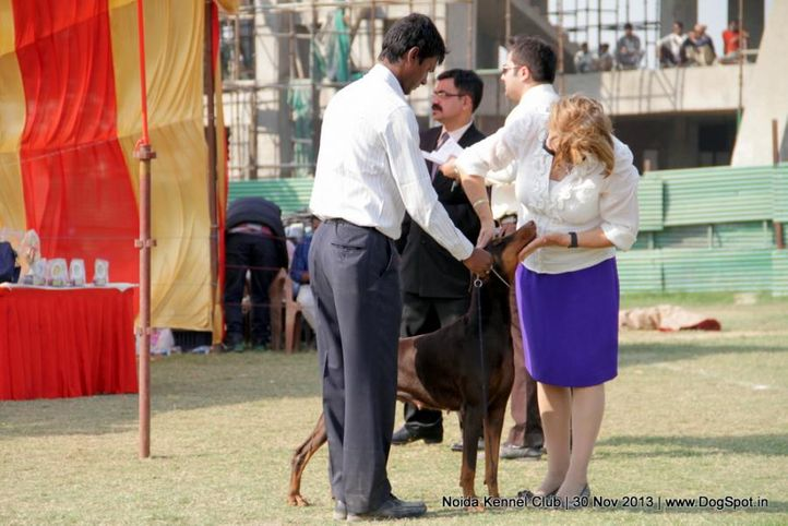 judging,people,sw-99,, Noida Dog Show 2013, DogSpot.in