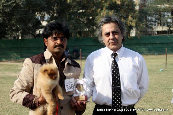 ex-366,pomeranian,sw-99,, Noida Dog Show 2013, DogSpot.in