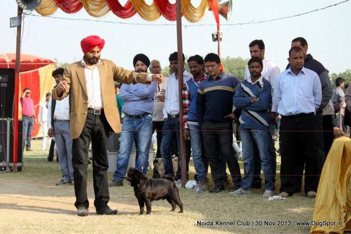 pug,sw-99,, Noida Dog Show 2013, DogSpot.in