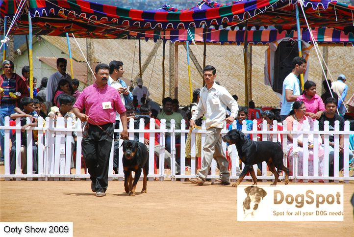 rottweiler,, OOty Dog Show 2009, DogSpot.in