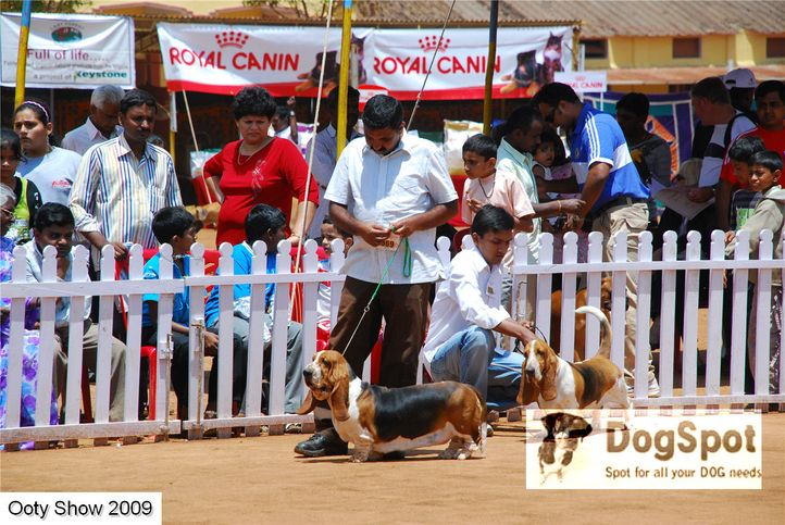 basset,, ooty dog show 2009, DogSpot.in