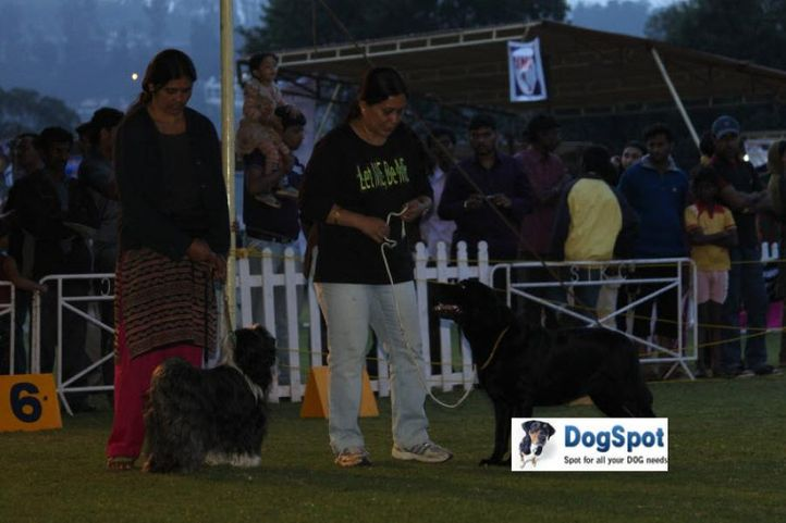 sw-18, lady handlers,ms eenakshi,, Ooty Dog Show 2010, DogSpot.in