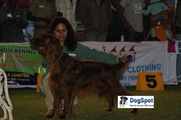 sw-18, lady handlers,ms nagina,, Ooty Dog Show 2010, DogSpot.in
