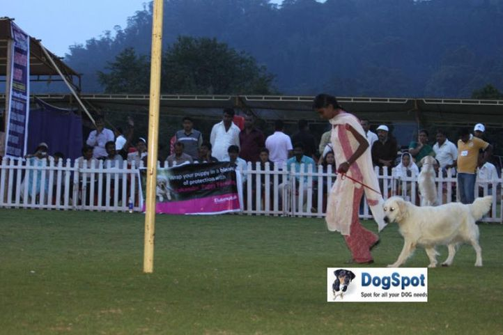 sw-18, lady handlers,, Ooty Dog Show 2010, DogSpot.in