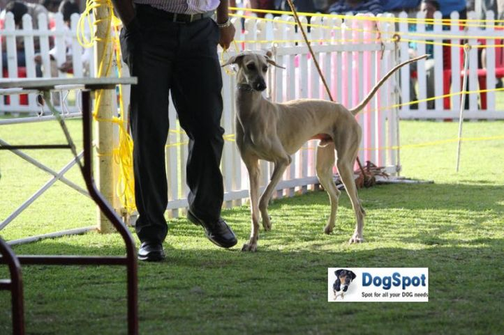 sw-18, chippiparai,, Ooty Dog Show 2010, DogSpot.in