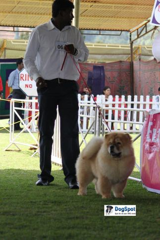 sw-18, chow chow,ex-61,, ASIA PUPPY BIG BIG, Chow Chow, DogSpot.in