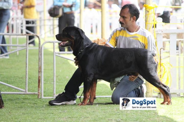 sw-18, rottweiler,, Ooty Dog Show 2010, DogSpot.in