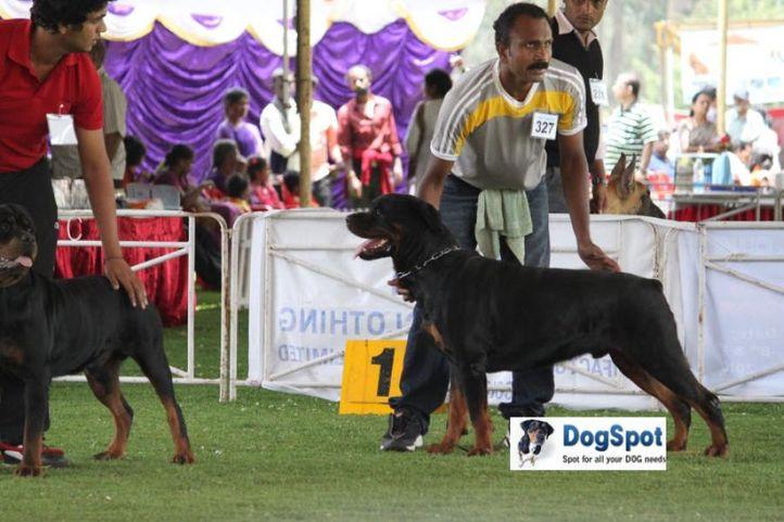 sw-18, ex-327,rottweiler,, NUTHAN, Rottweiler, DogSpot.in
