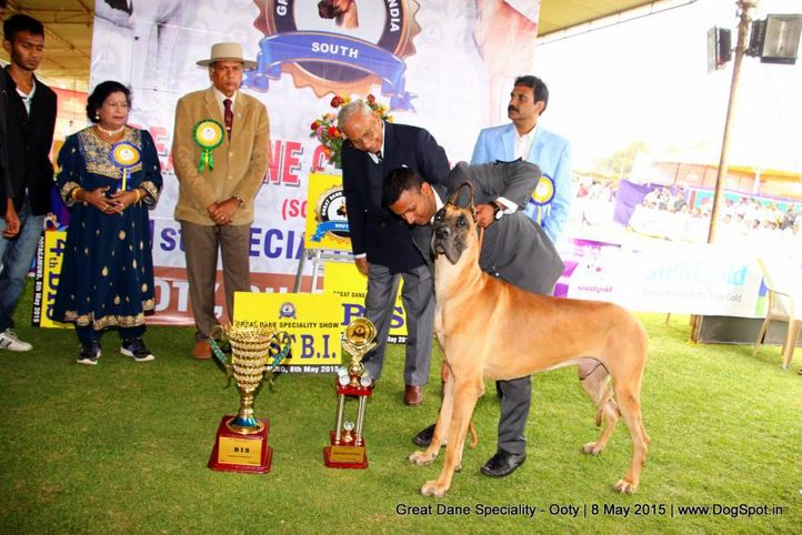 line-up great dane speciality,, Ooty Specialities & All Breed Dog Show, DogSpot.in
