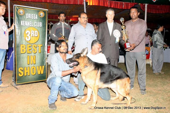 lineup,sw-104,, Orissa Dog Show 2013, DogSpot.in